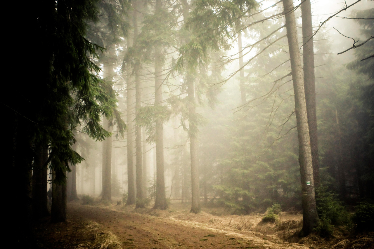Katrin Behrens Photography Forest