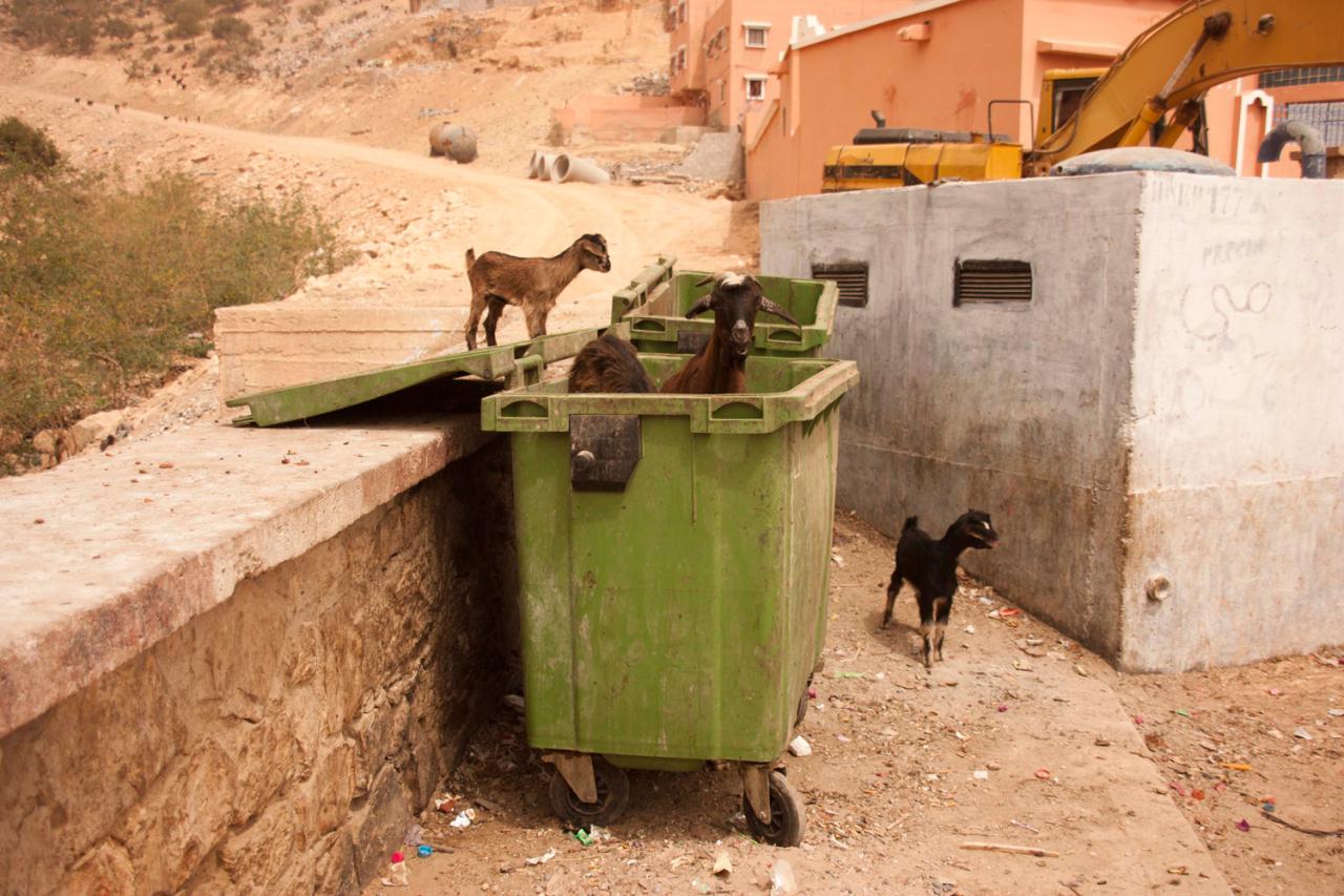 Katrin Behrens Morocco